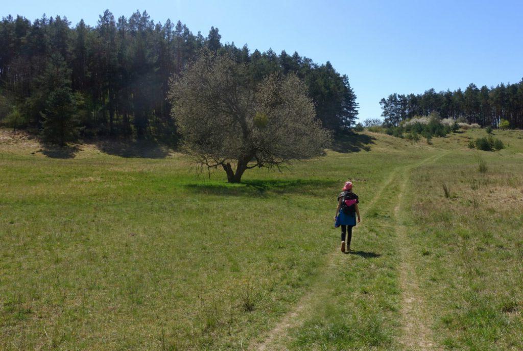 Wanderweg im Naturschutzgebiet Charlottenhöhe.