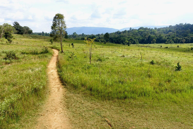 Hiking Trail durch den Khao Yai Nationalpark.