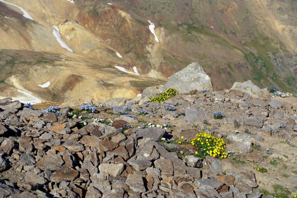 Am Aragats blühen gelbe Blumen.