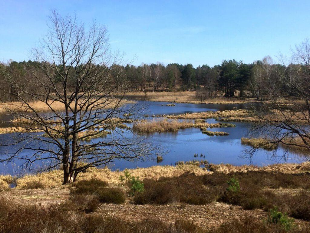 Kramssee in der Kleinen Schorfheide.