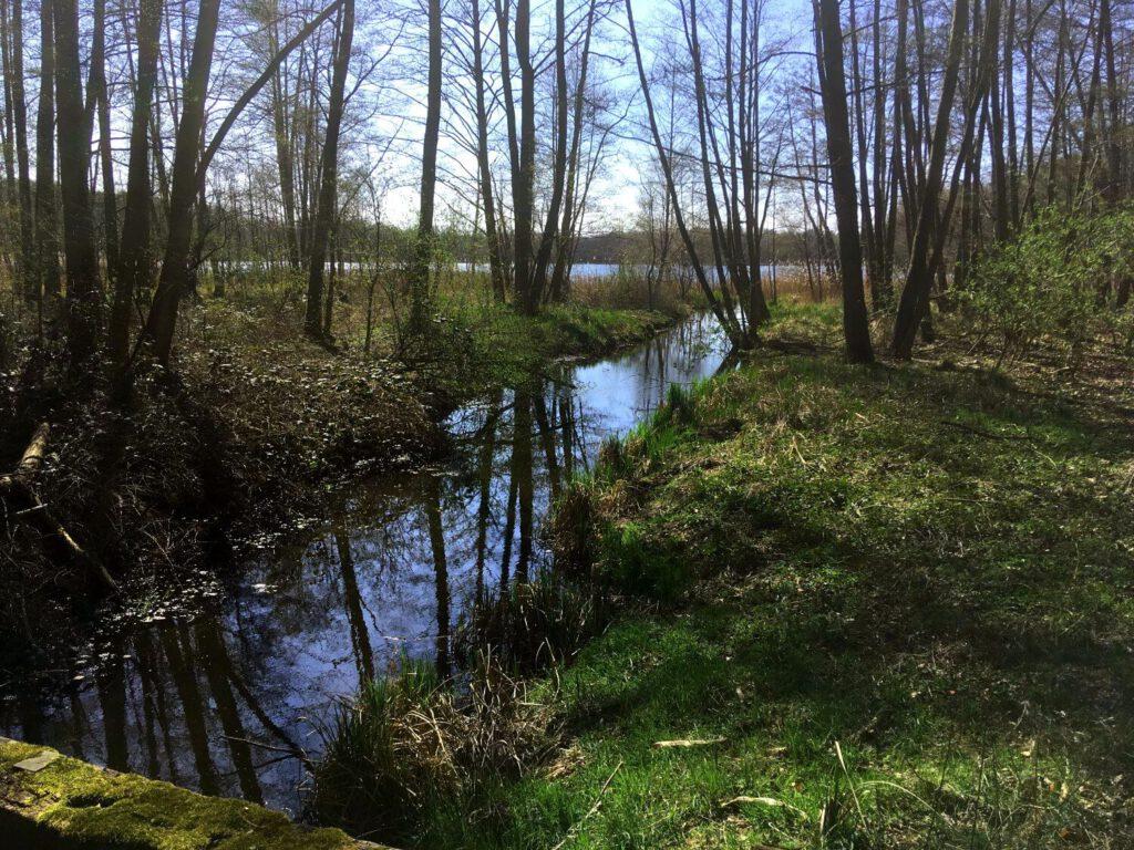 Großer Beutelsee im Naturpark Uckermärkische Seen.