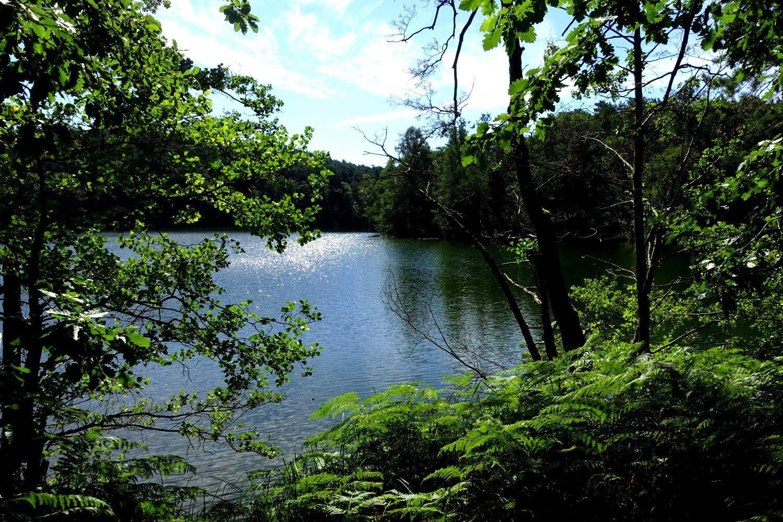 Wirchensee im südlichen Teil des Schlaubetals.