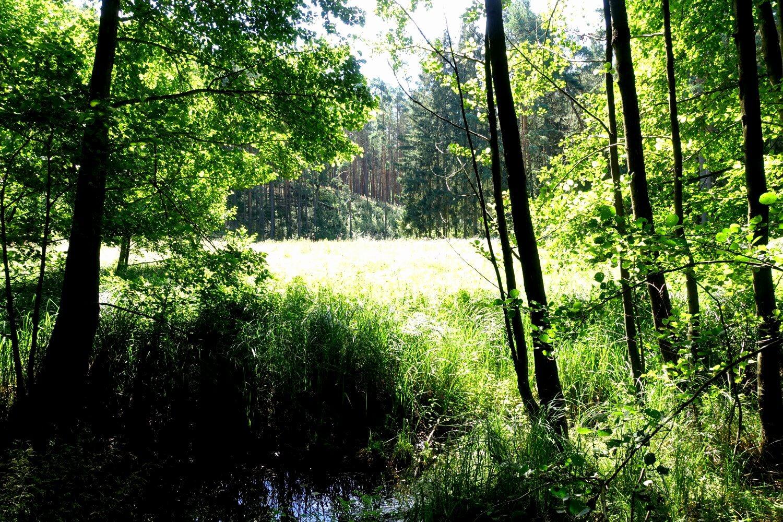 Quelle der Schlaube in den Wirchenwiesen.