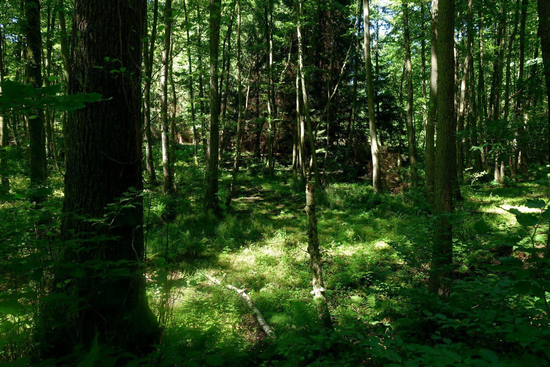 Dichter Wald im oberen Schlaubetal.