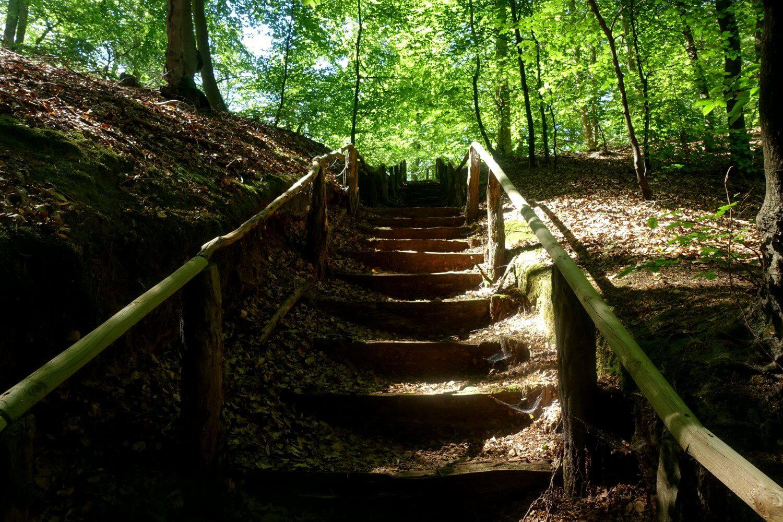 Treppenweg auf dem Schlaubetal-Wanderweg.