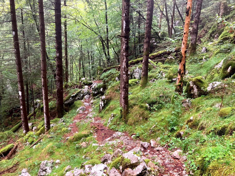 Soča-Trail im Wald.