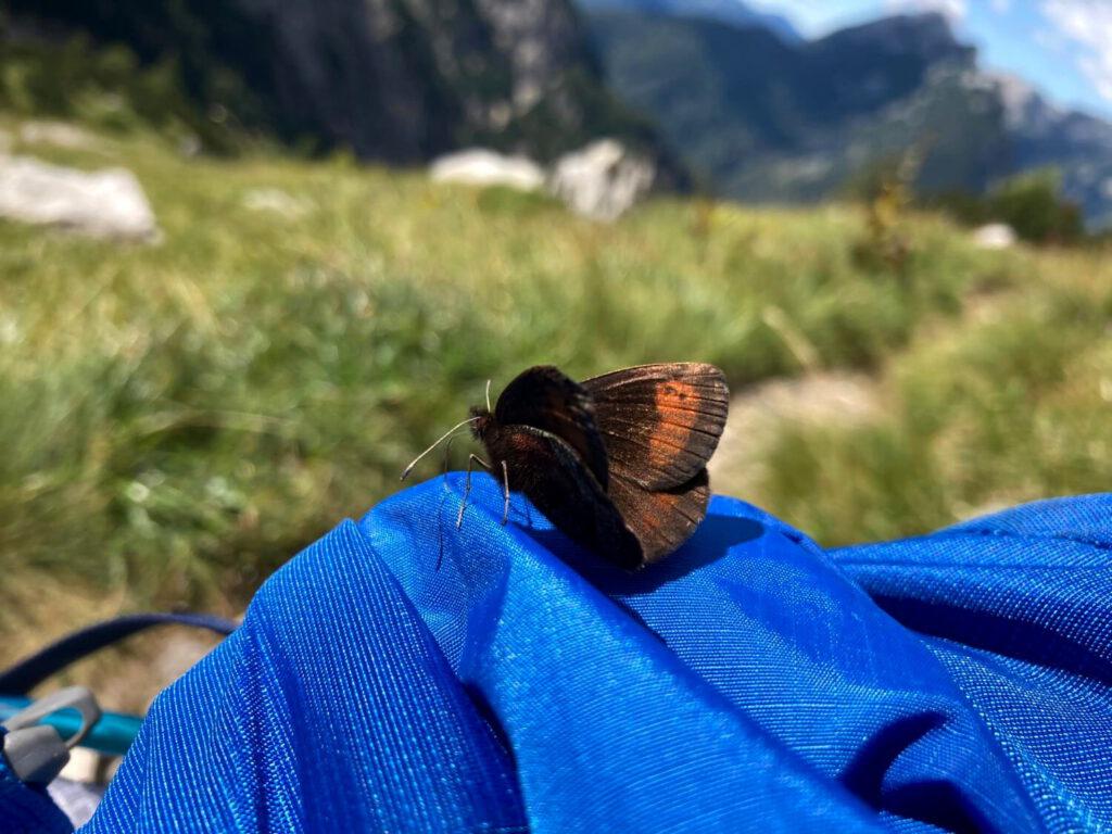 Schmetterling auf einem Rucksack.