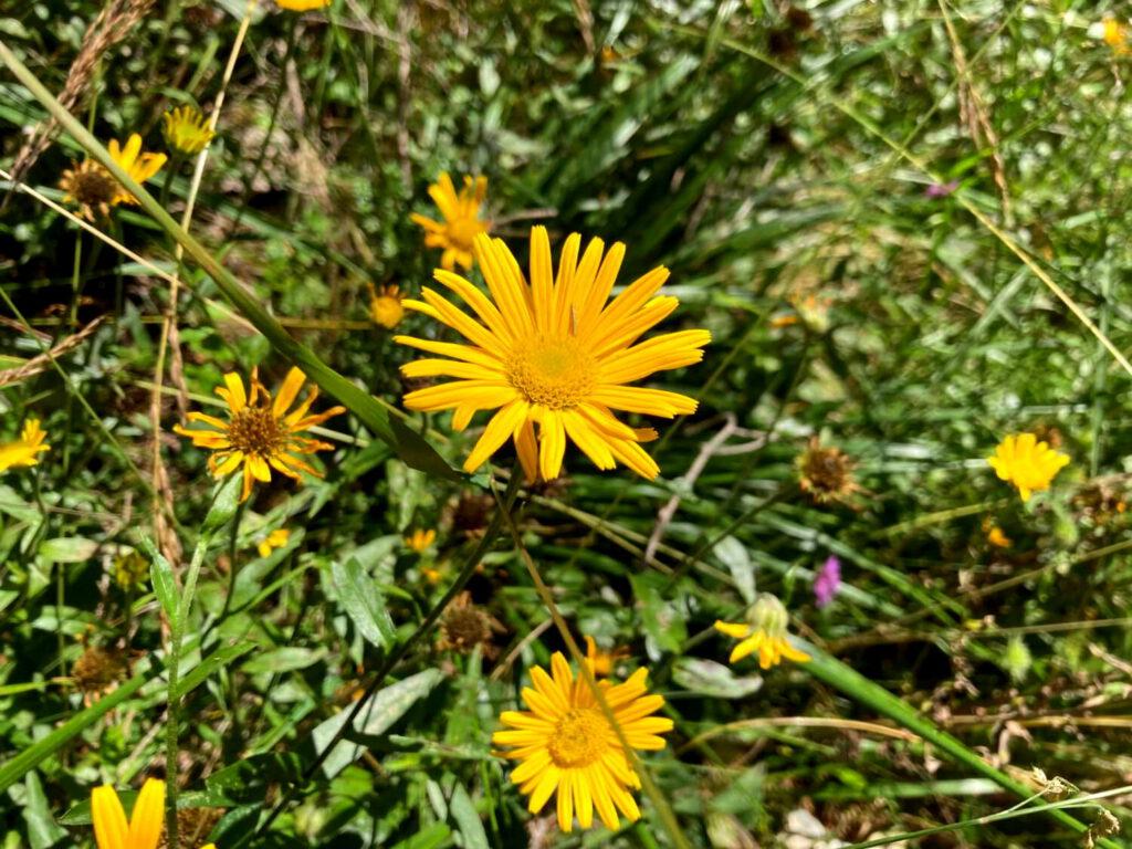 Blumen im Triglav-Nationalpark.