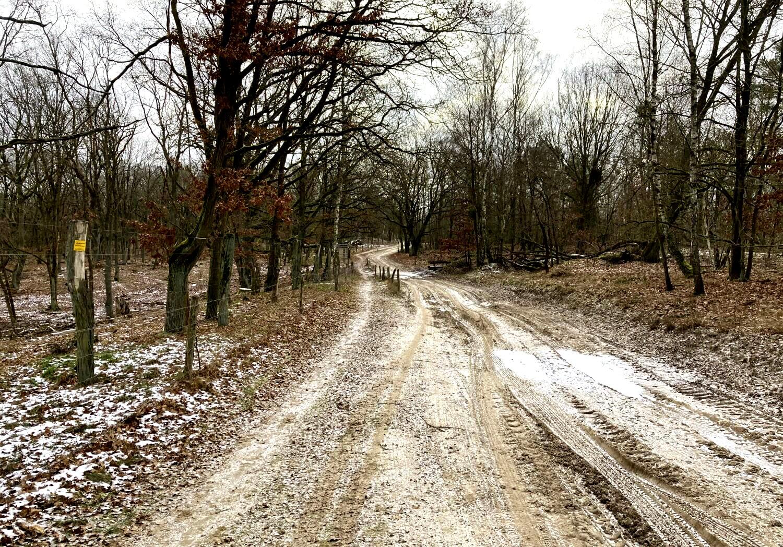 Rundwanderweg in der Döberitzer Heide.