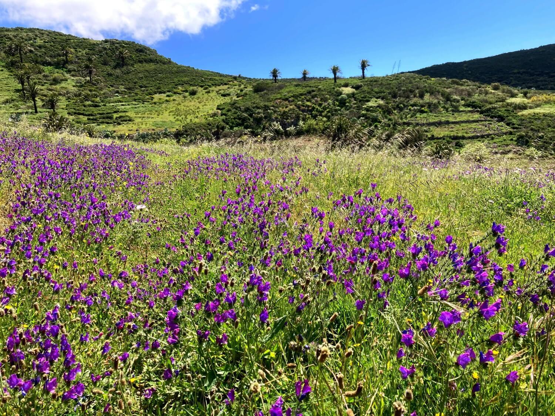 Blumenwiesen in La Gomera.