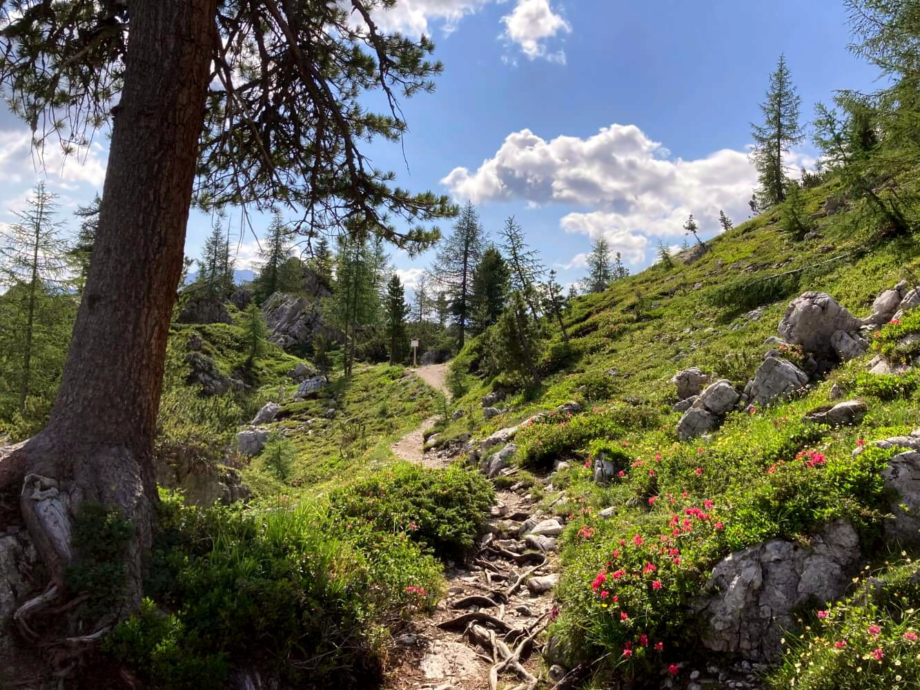 Wandern auf der Alta Via 1.