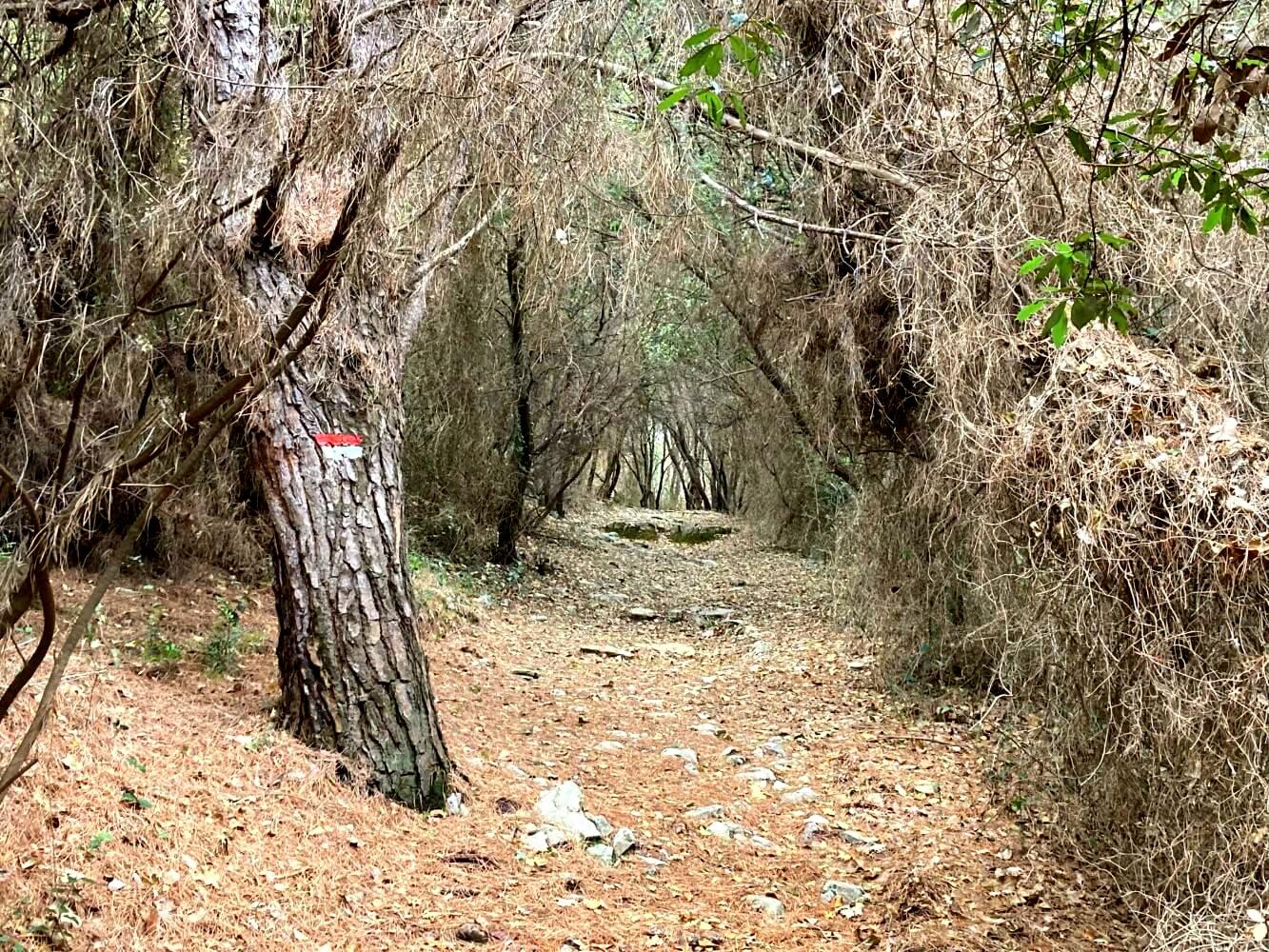 Wandern auf Palmaria auf dem Weg der Verdammten.