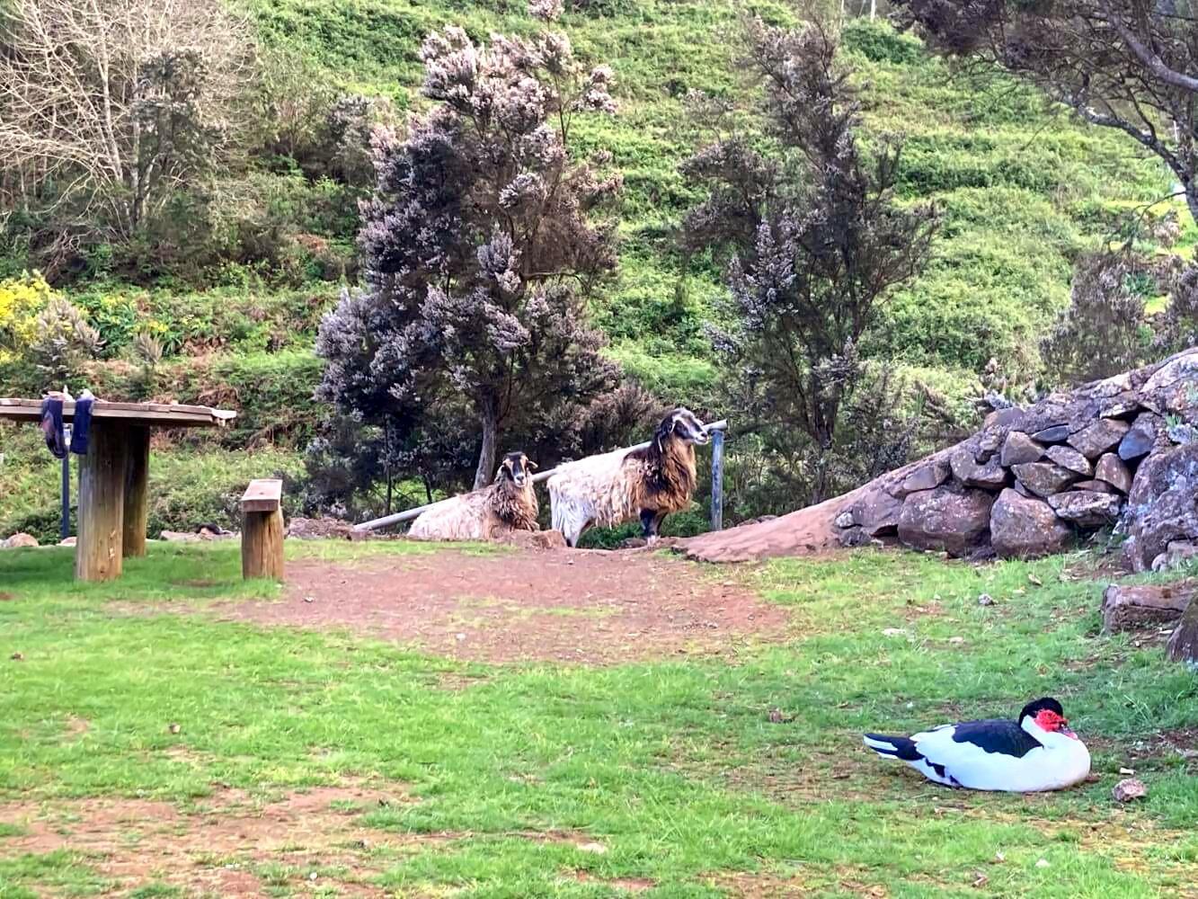 Offizieller Campingplatz La Vista in La Gomera.